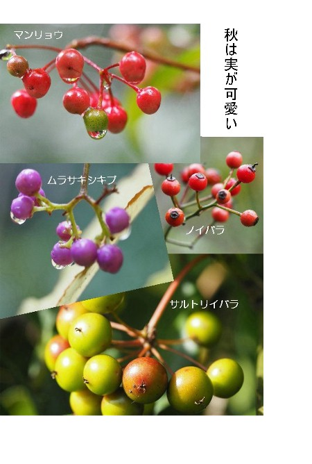[20161112]公園-450.jpg