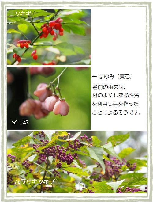 ムラサキシキブ-500T.jpg