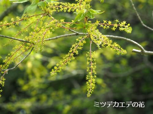 初夏の花 (216)-500T.jpg