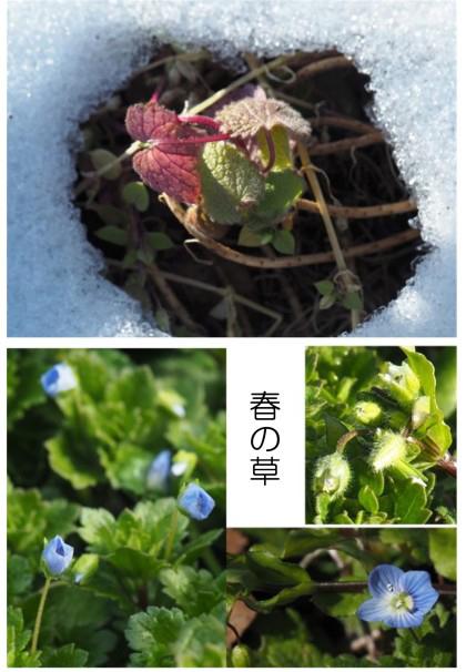春の草-550.jpg