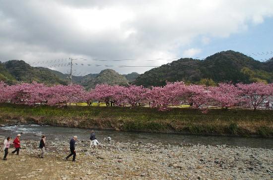 桜 (12)-550.jpg