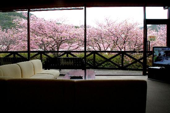 桜 (269)-550.jpg