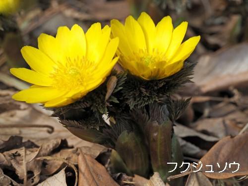 福 (55)-500T.jpg