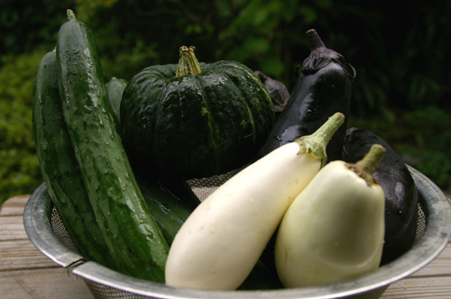 野菜 (8)-500.jpg