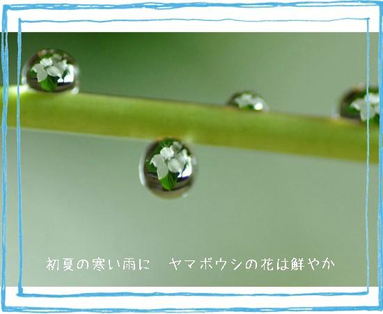 やまぼ-550T.jpg