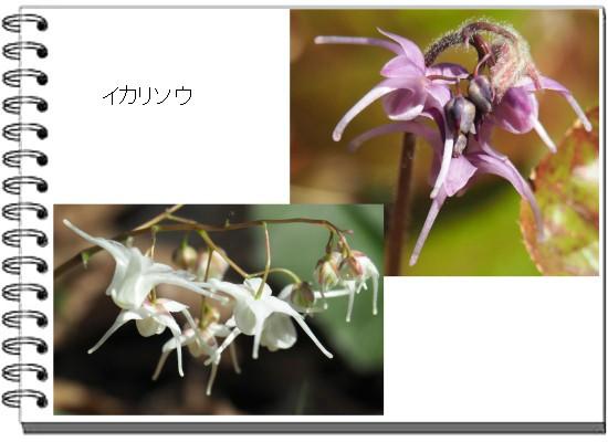 イカリ-550-T.jpg