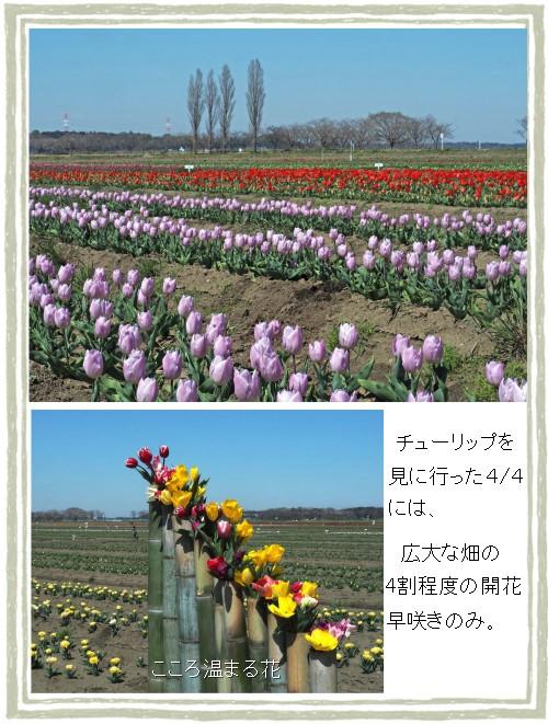タケヅツ-500-3T.jpg