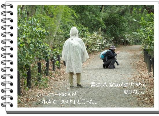 タヌキ-550-5T.jpg