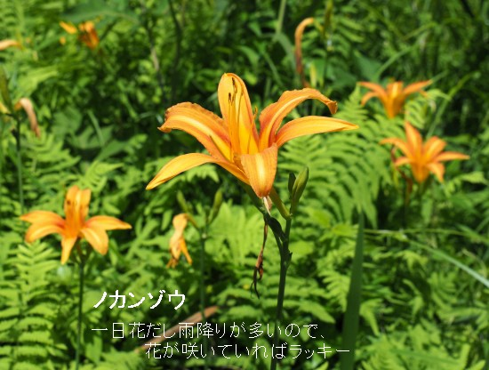 トモエ (29)-550T.jpg