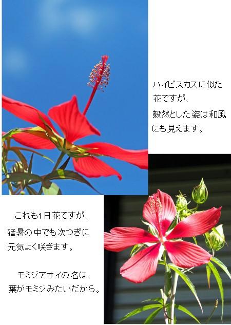 モミジ空-450-4T.jpg