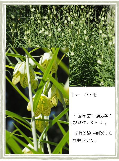 ヤヨ-500-3T.jpg