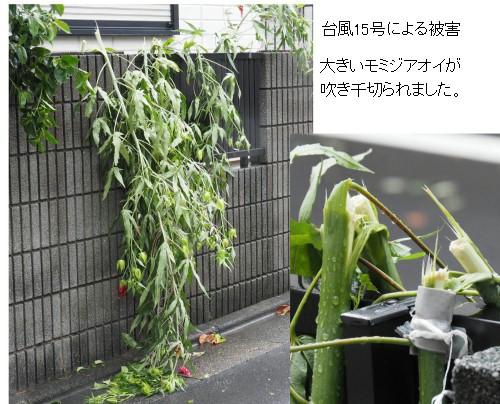 台風15号-500-2T.jpg