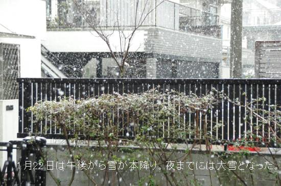 大雪ー1 (27)-500T.jpg