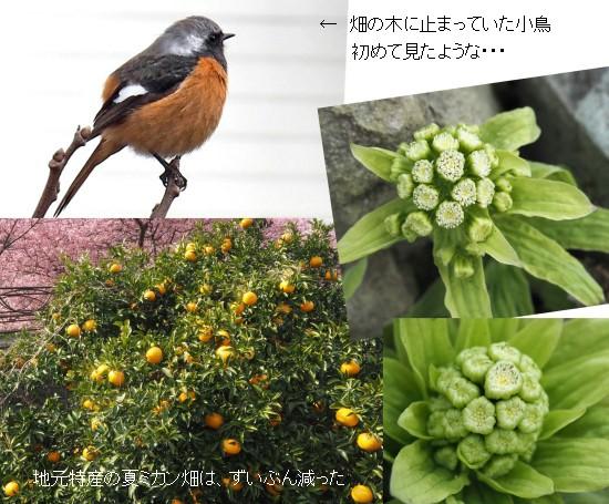 小鳥-2-550-6T.jpg