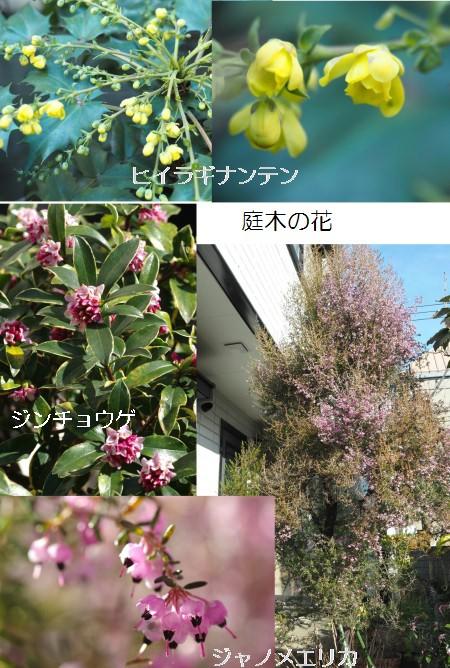 庭木-450T.jpg