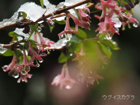 春分の日 (29)-550T.jpg