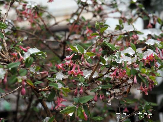 春分の日 (7)-550T.jpg