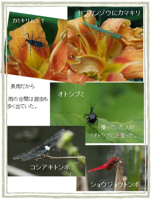 花と昆虫-500-10T.jpg