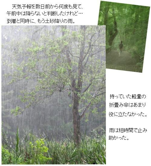 雨風景-500-7T.jpg