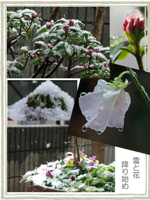 雪と植物-500TT.JPG