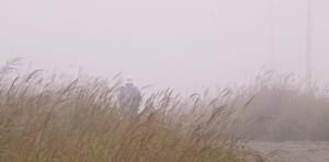 霧 (4)-300.jpg