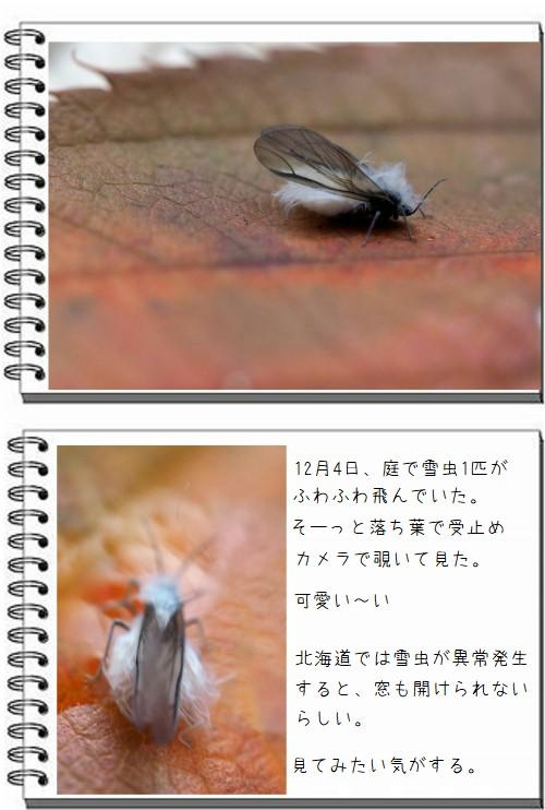 雪虫を撮った:遊び半分の時間:So,net blog